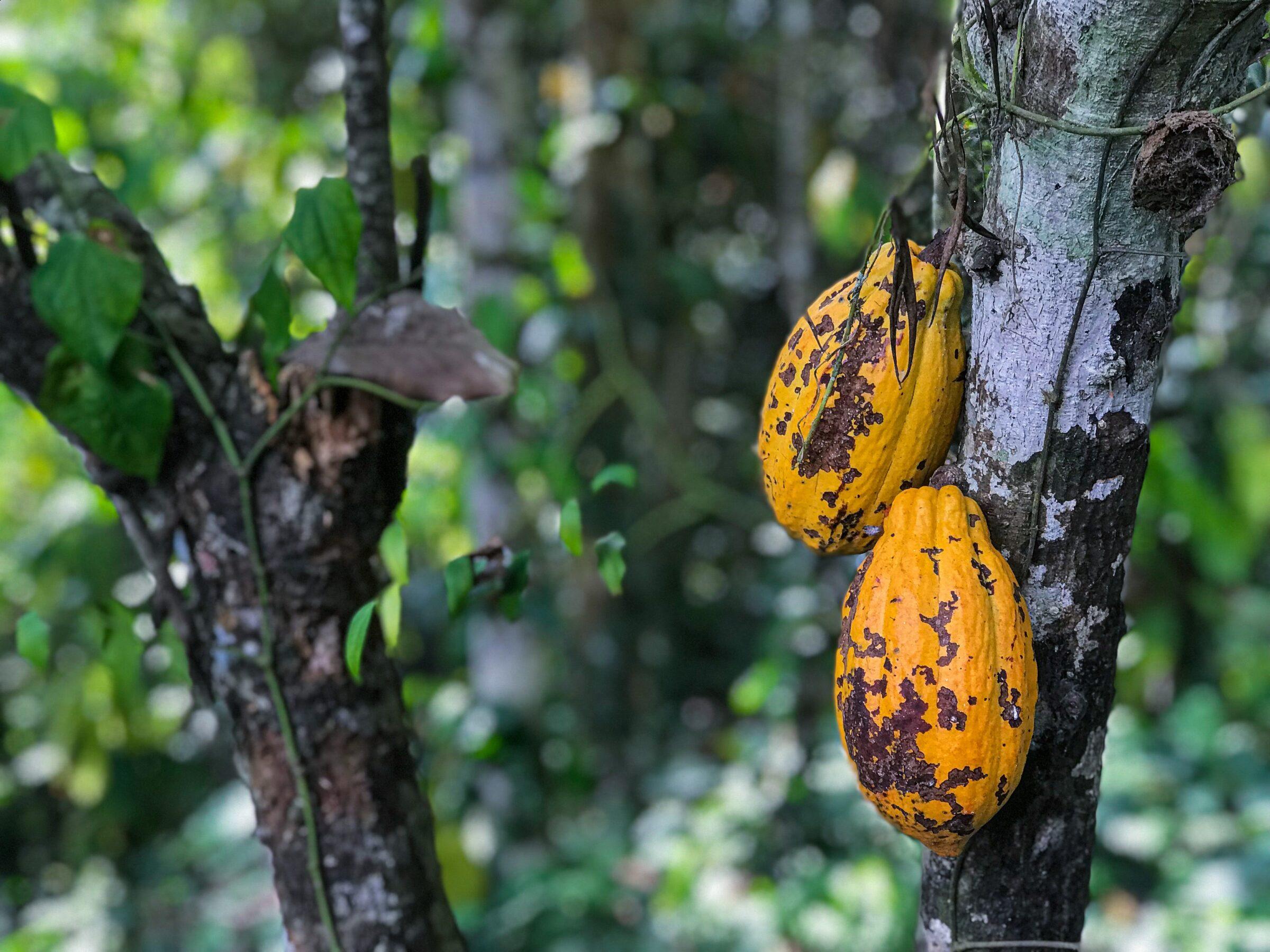 Kakao Infos